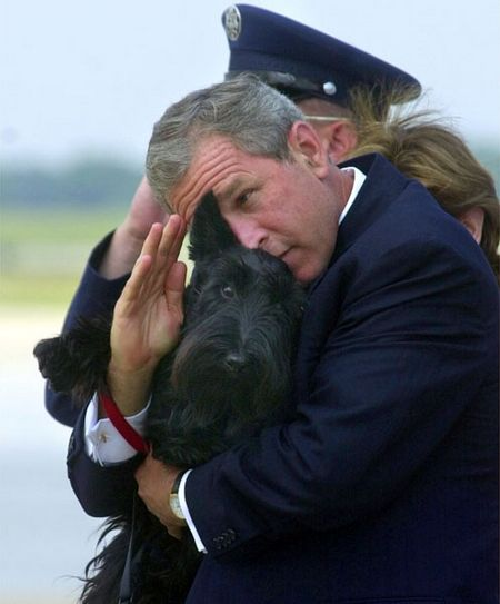 bush-and-dog