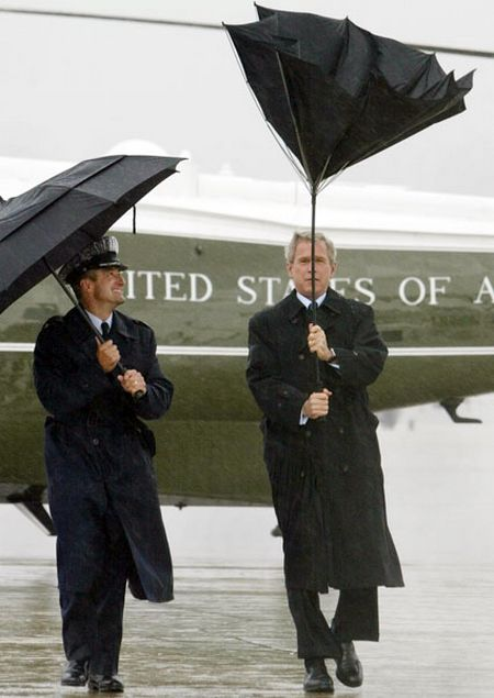 bush-umbrella