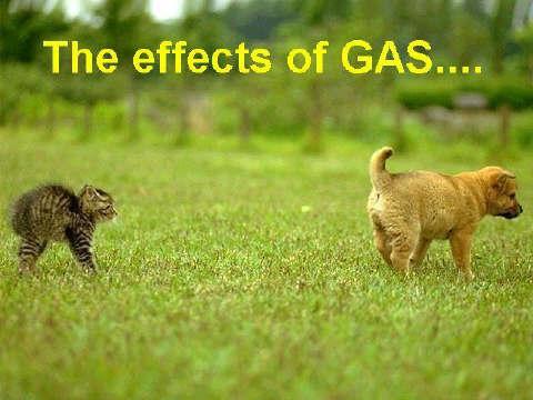 dog-gas